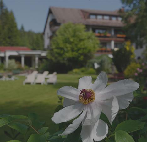 Schwarzwald kennenlernen