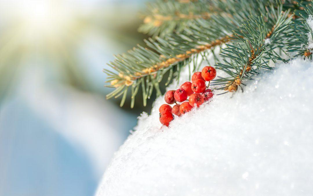 Kniebiser Weihnacht